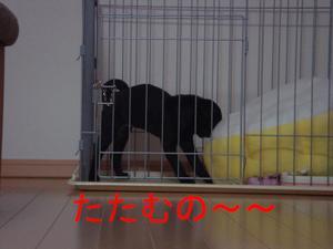 Dsc03055